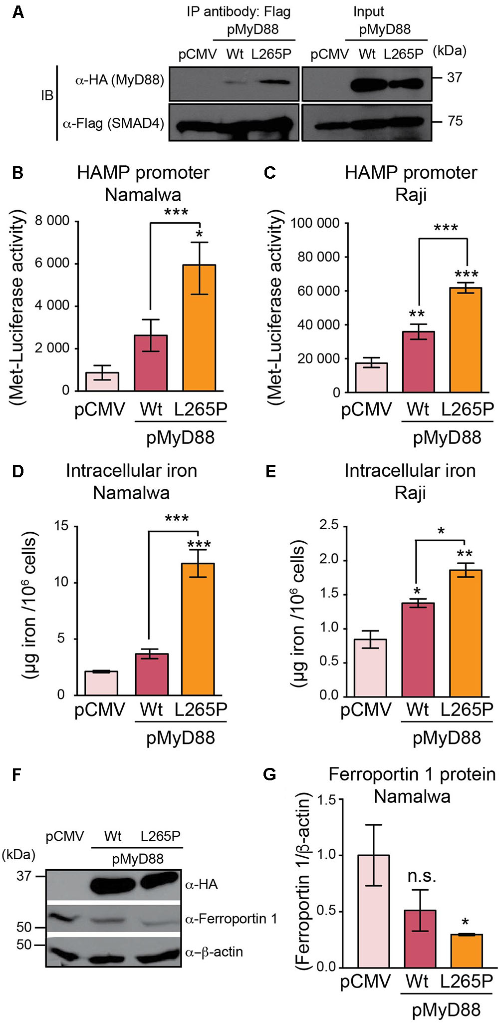 Frontiers | MyD88 Regulates the Expression of SMAD4 and the
