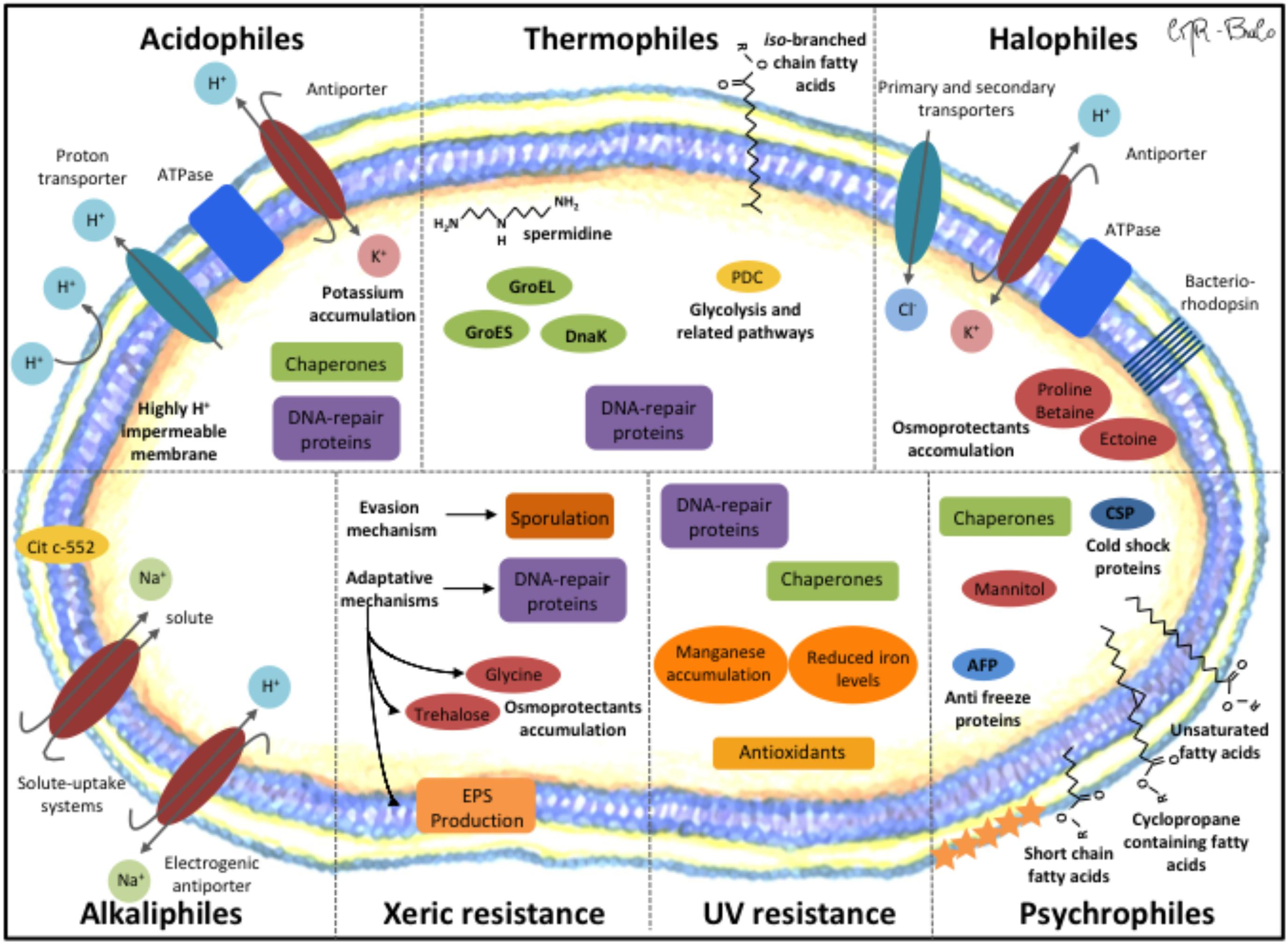 Frontiers | Living at the Frontiers of Life: Extremophiles