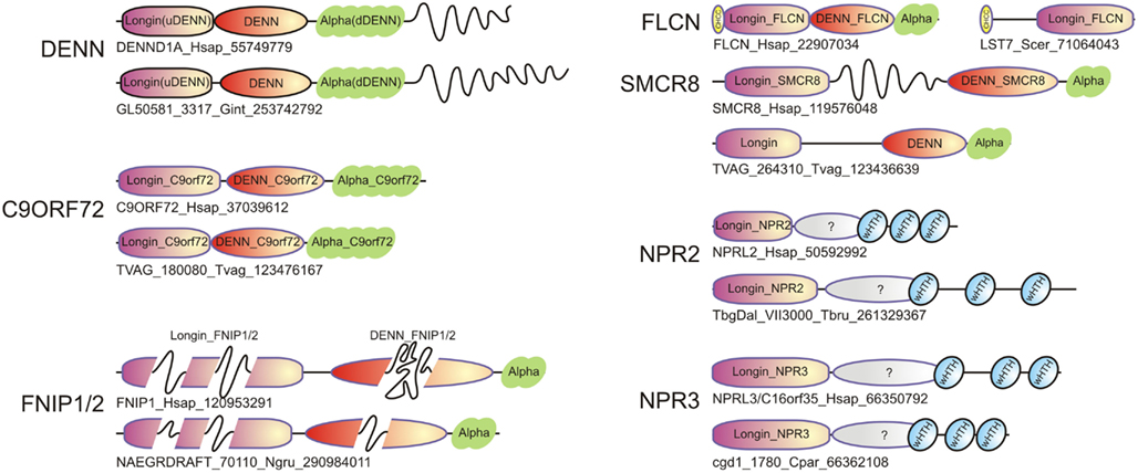 Frontiers | Discovery of Novel DENN Proteins: Implications for the Evolution of Eukaryotic ...