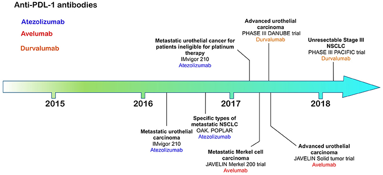 Frontiers | On the Road to Immunotherapy—Prospects for