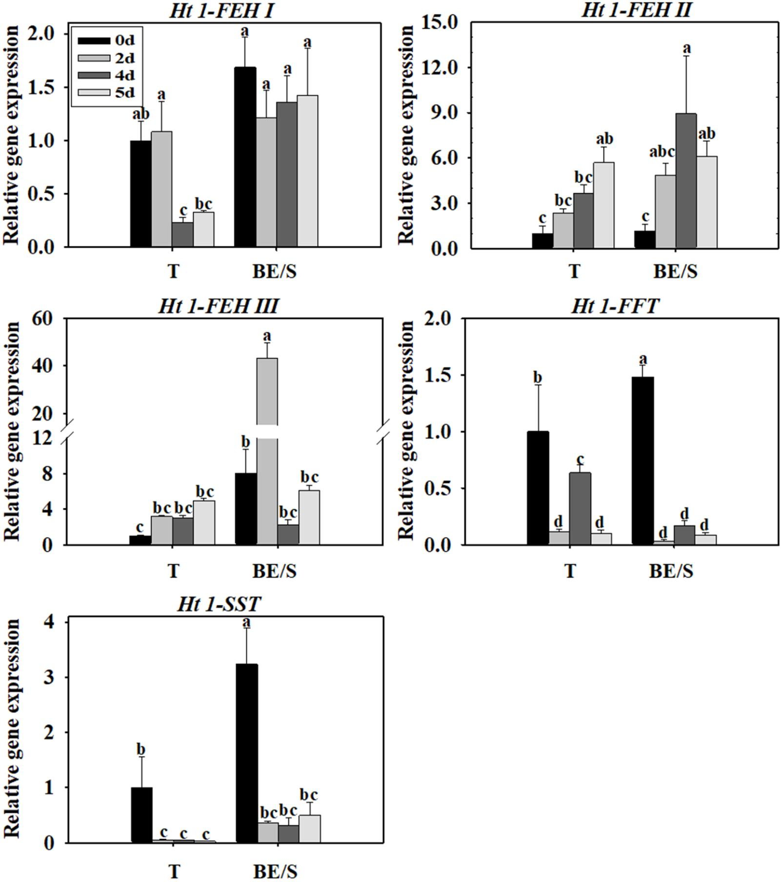 Frontiers | Characterization of Fructan Metabolism During Jerusalem