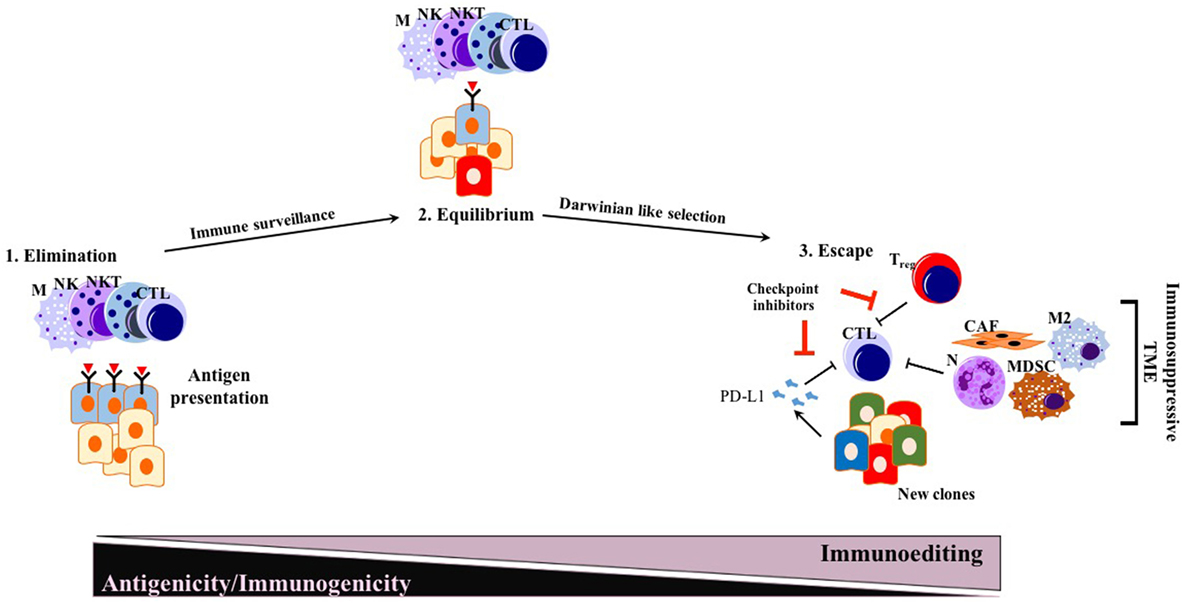 Frontiers   Immune Checkpoint Inhibition for Pancreatic