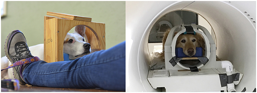 Frontiers   Clinical Findings in Dogs Trained for Awake-MRI