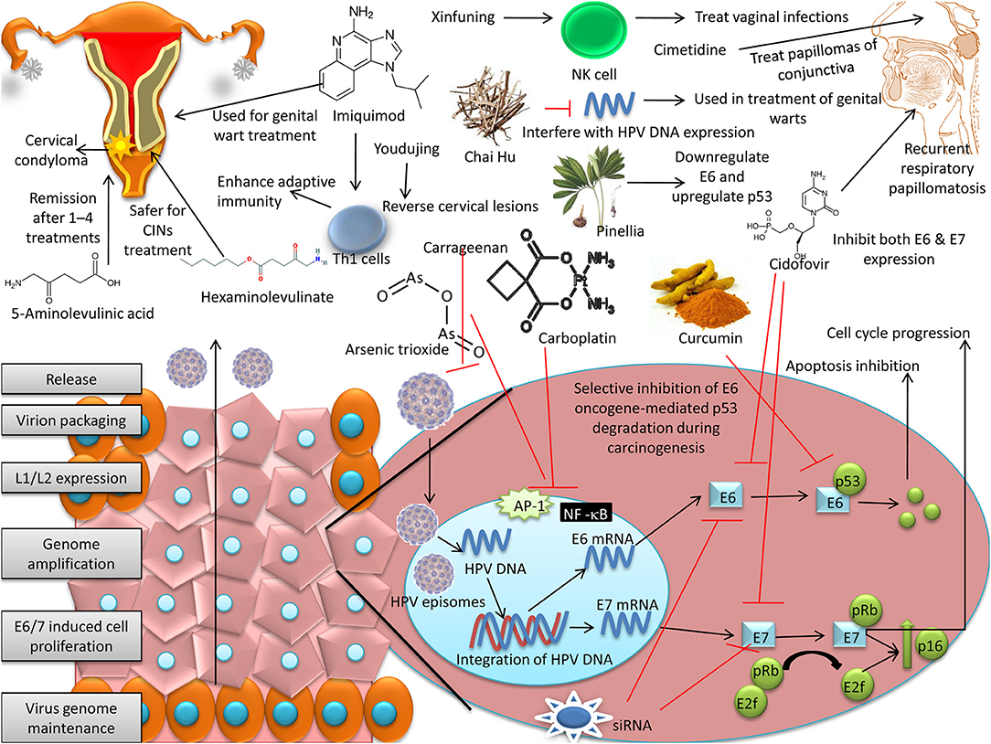 Frontiers | Advances in Designing and Developing Vaccines, Drugs and