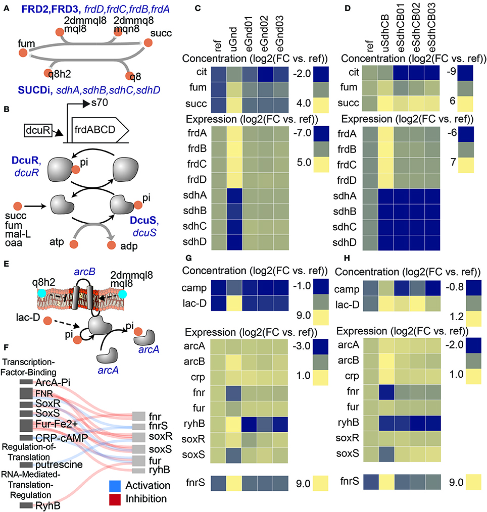 Frontiers | Growth Adaptation of gnd and sdhCB Escherichia