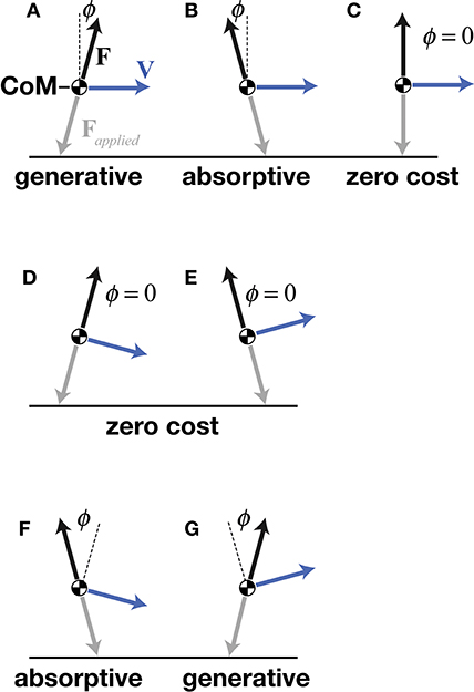 Frontiers | Linking Gait Dynamics to Mechanical Cost of