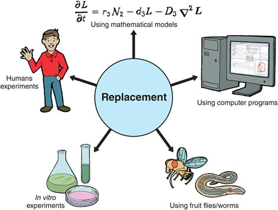 איור 1 - תחליפים לניסויים בבעלי חיים.