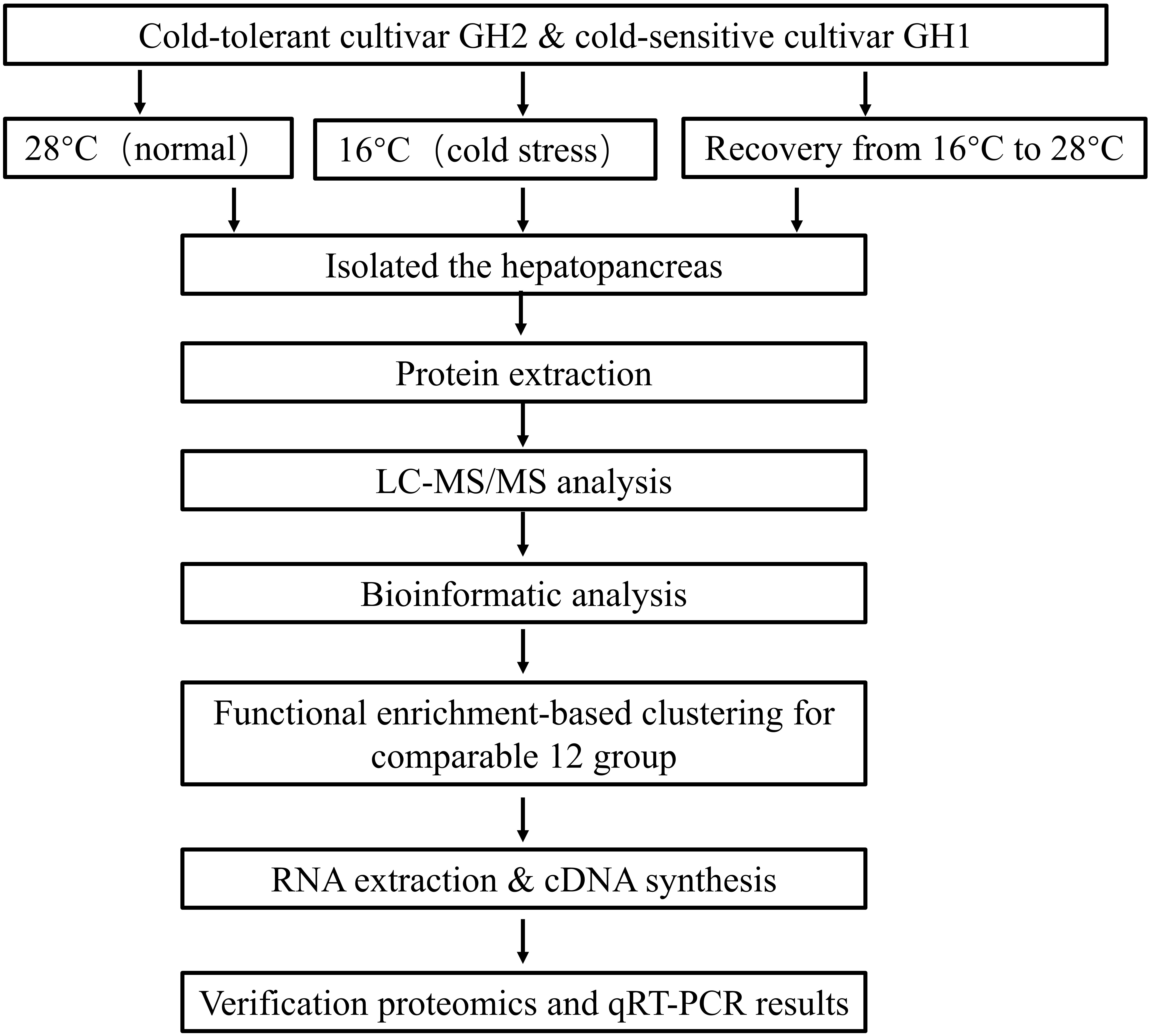 Frontiers | Proteomic Responses Under Cold Stress Reveal