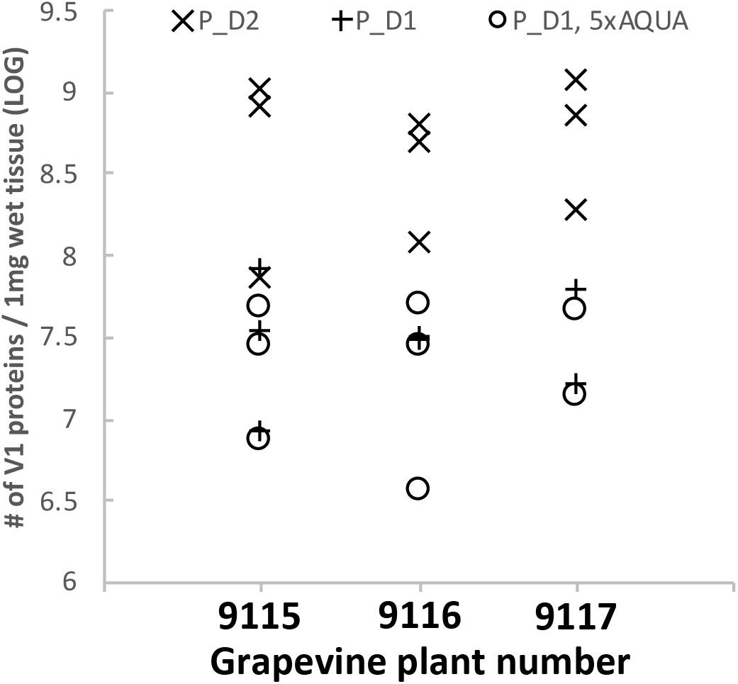 Frontiers | Absolute Quantification of Grapevine Red Blotch