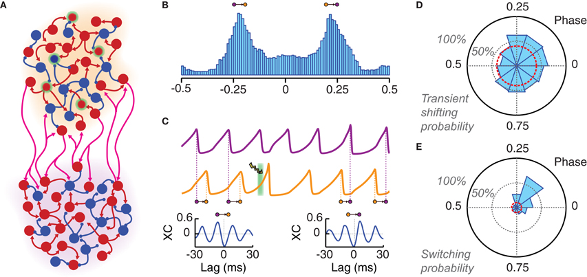 Frontiers | Controlling the oscillation phase through precisely