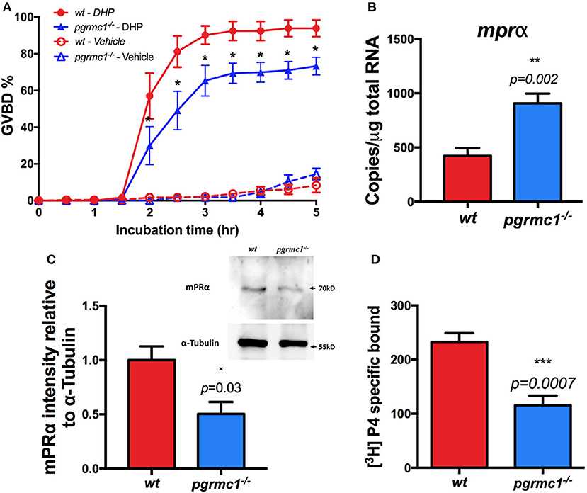 Frontiers | Pgrmc1 Knockout Impairs Oocyte Maturation in Zebrafish