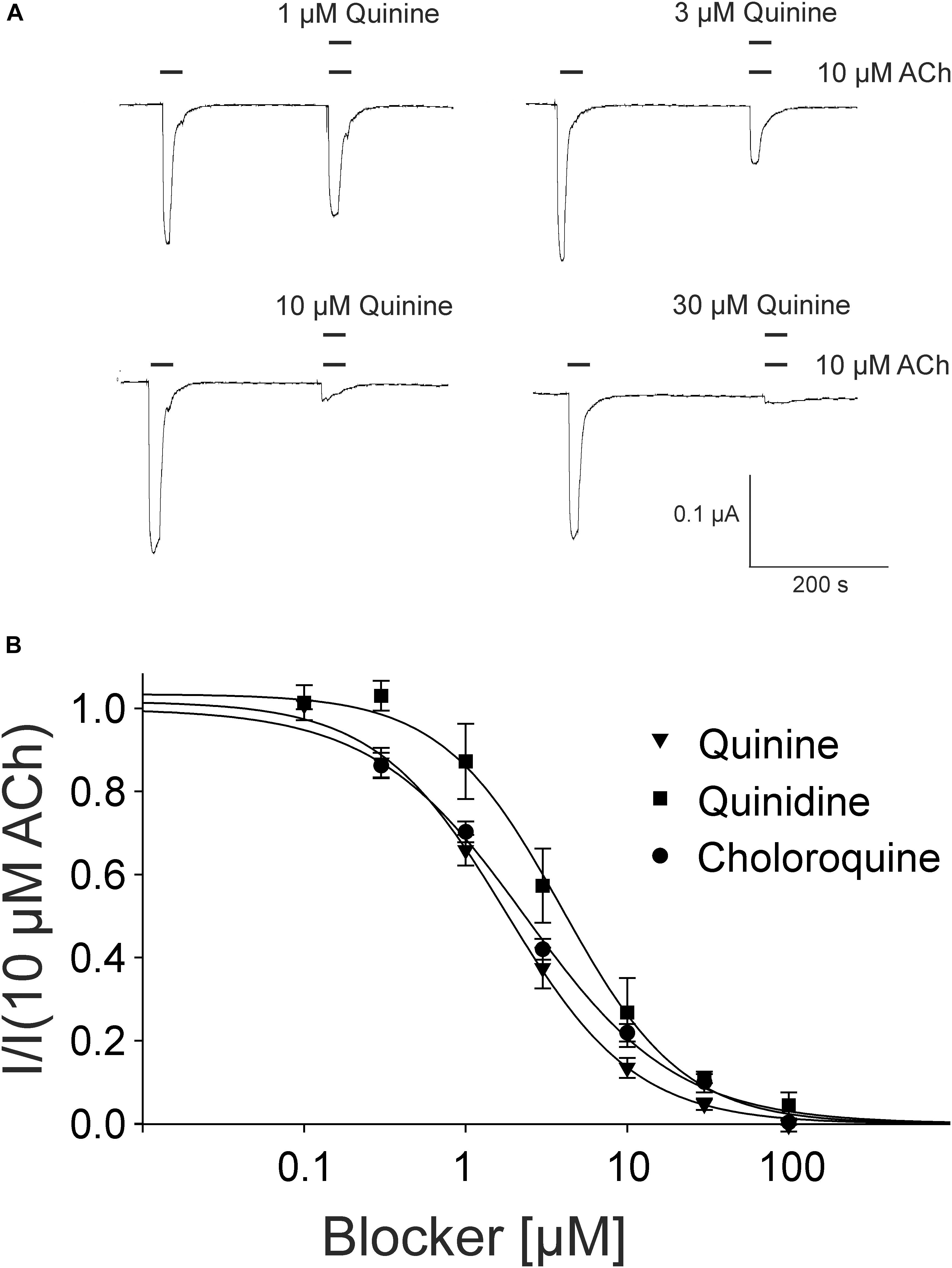 Frontiers | Effects of Quinine, Quinidine and Chloroquine on
