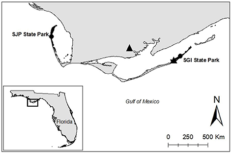 Frontiers Influences Of The Local Climate On Loggerhead Hatchling