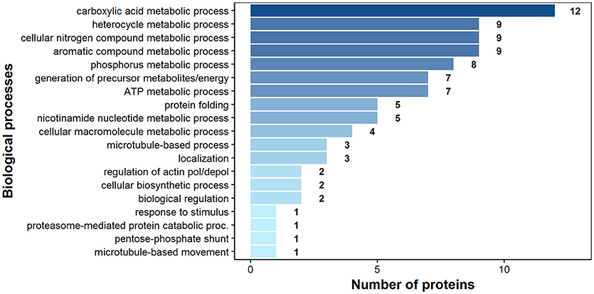 Frontiers | Immunoproteomics and Surfaceomics of the Adult