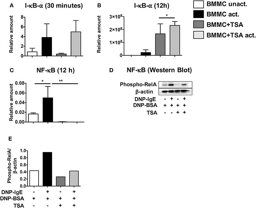 Frontiers | Epigenetic Regulation via Altered Histone Acetylation