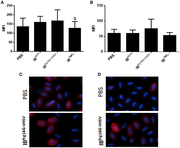 Frontiers | Fish Red Blood Cells Modulate Immune Genes in Response
