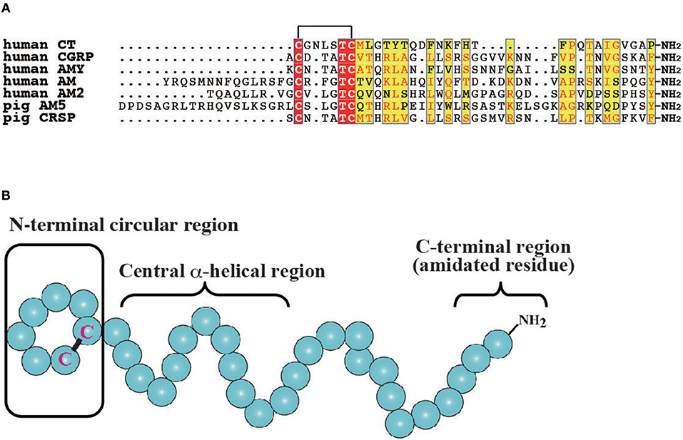 Frontiers | The Calcitonin/Calcitonin Gene-Related Peptide Family in