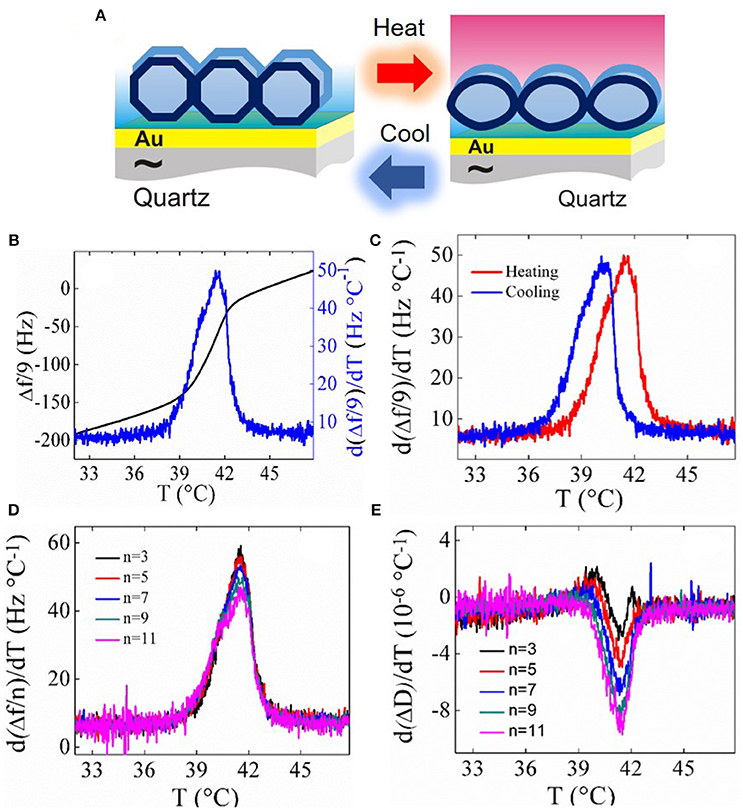 Frontiers | Quartz Crystal Microbalance With Dissipation