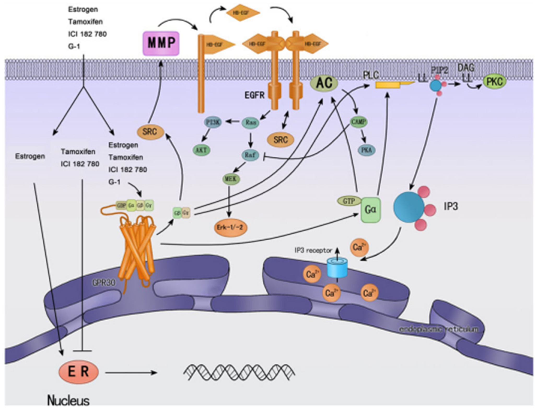 mechanisms of steroid hormone action