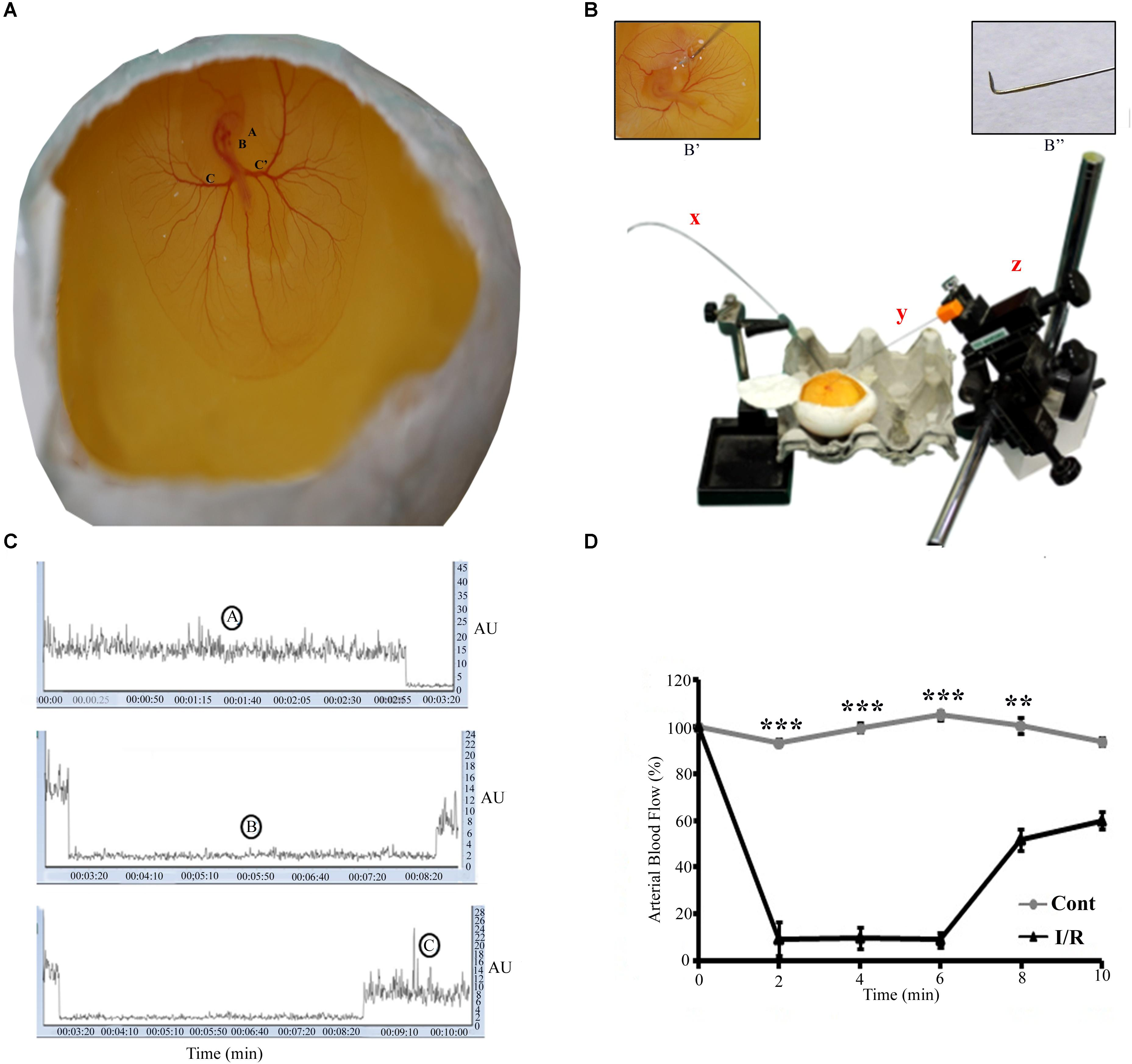 Frontiers | Chick Embryo: A Preclinical Model for