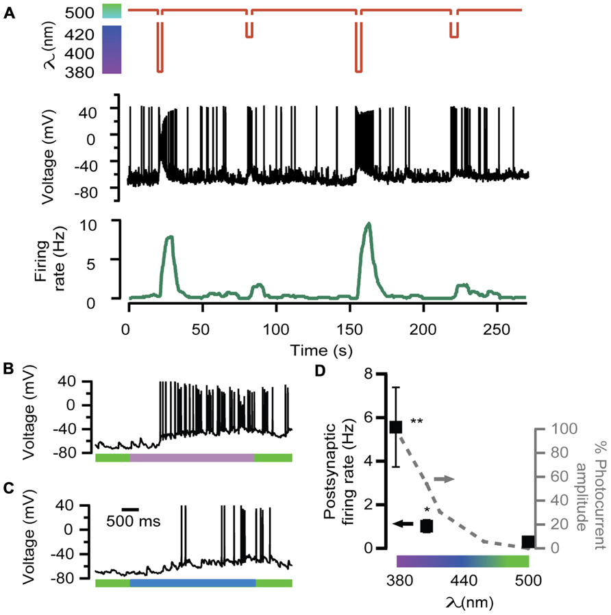 Frontiers optical modulation of neurotransmission using calcium frontiersin ccuart Gallery