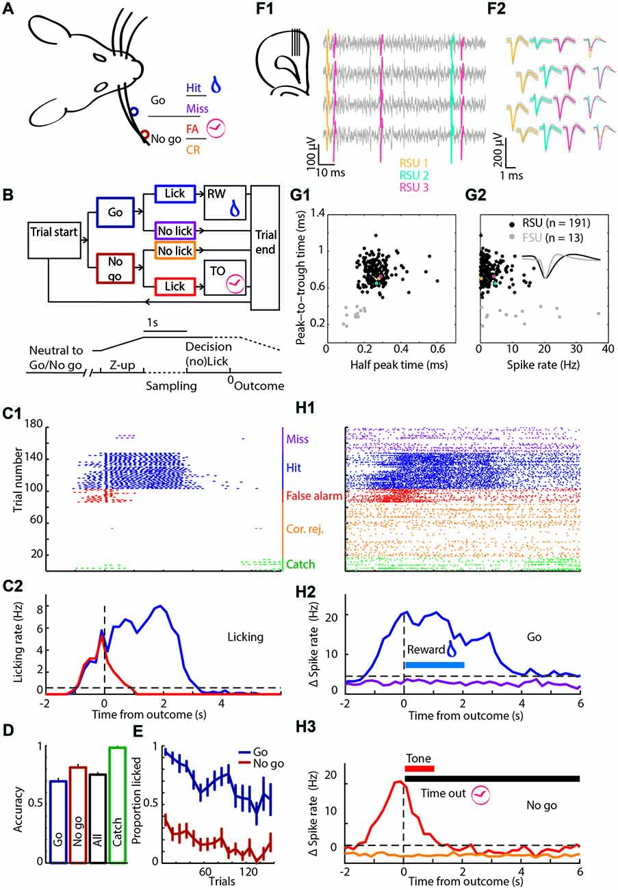 Frontiers Neural Representation Of Motor Output Context And Discrete Passive Tone Control Circuit Above Does Not Violate The