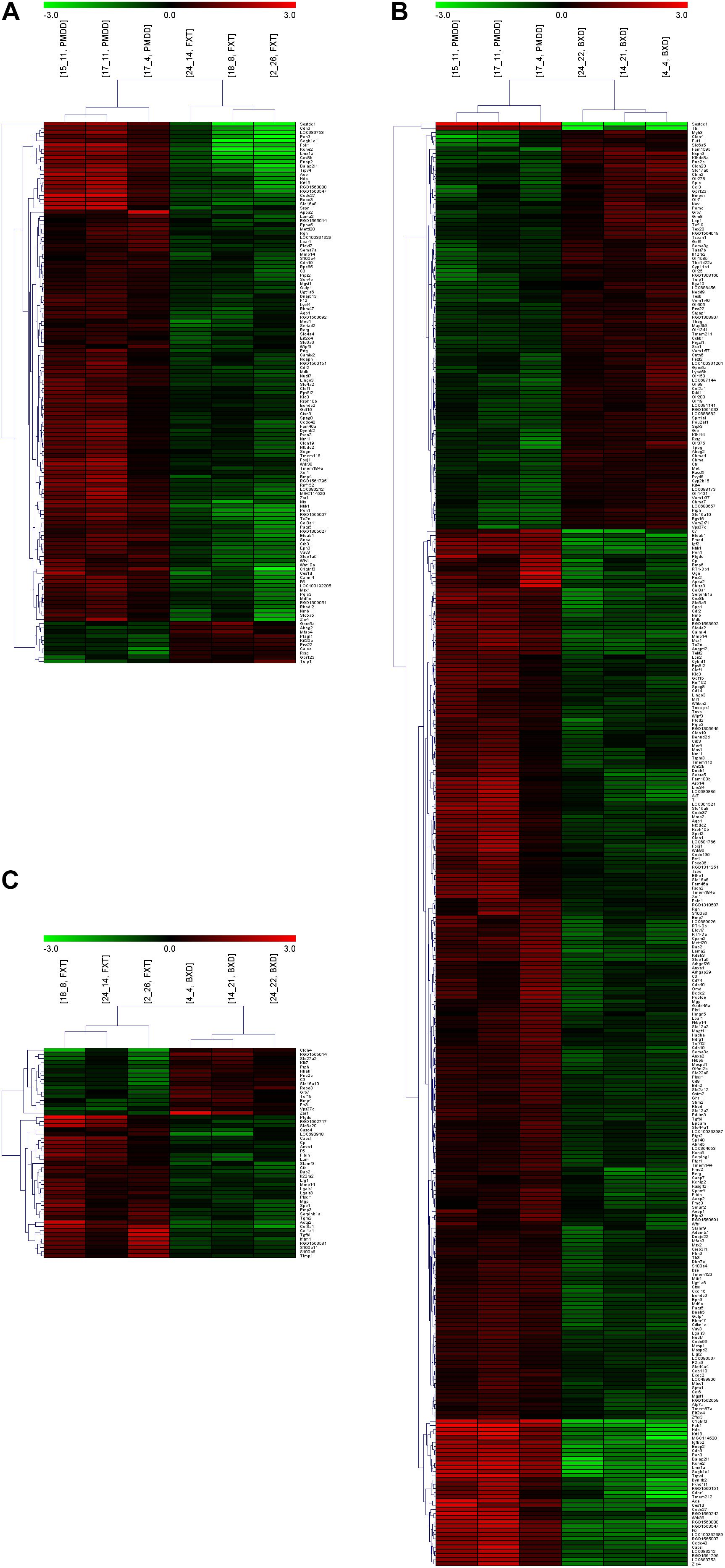 Frontiers | Gene Expression in the Hippocampus in a Rat