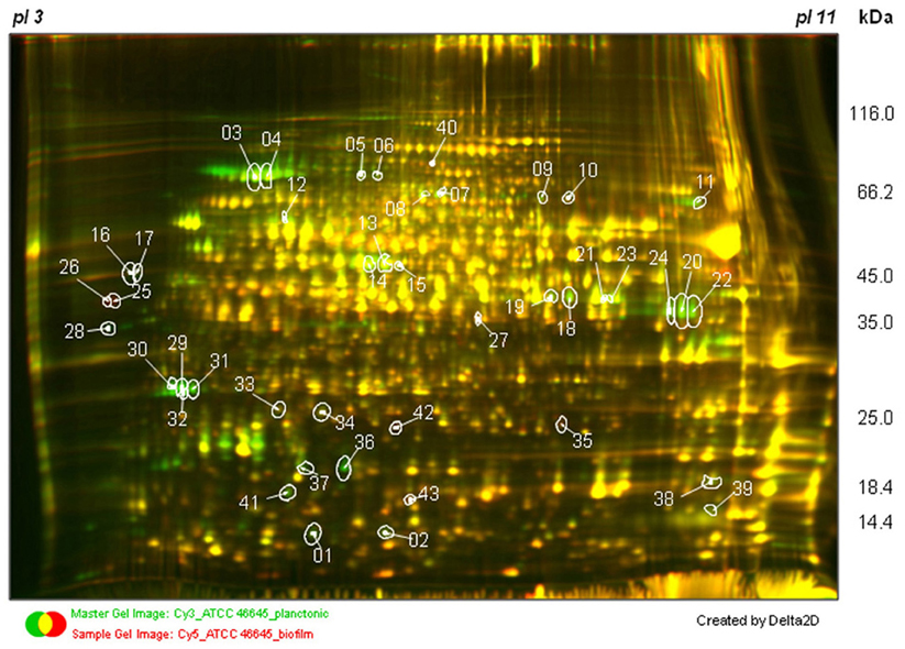 separation of proteins investigation Characterization of potato varieties by electrophoretic separation of the tuber proteins  scope of this investigation 1  lished a protein separation by means of.
