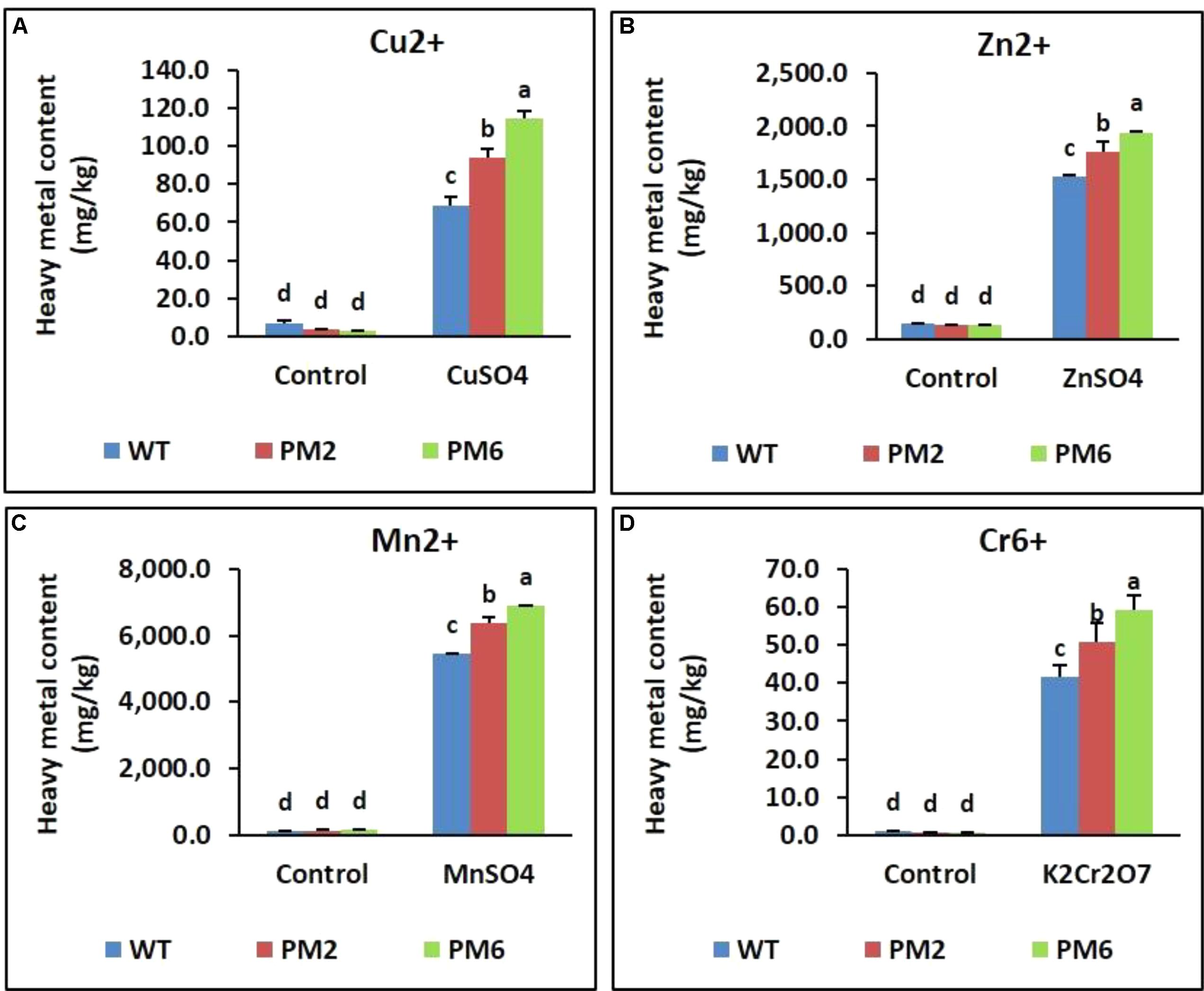 Frontiers | Overexpression of RsMYB1 Enhances Anthocyanin