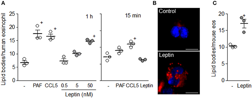 Frontiers   Leptin Elicits LTC4 Synthesis by Eosinophils