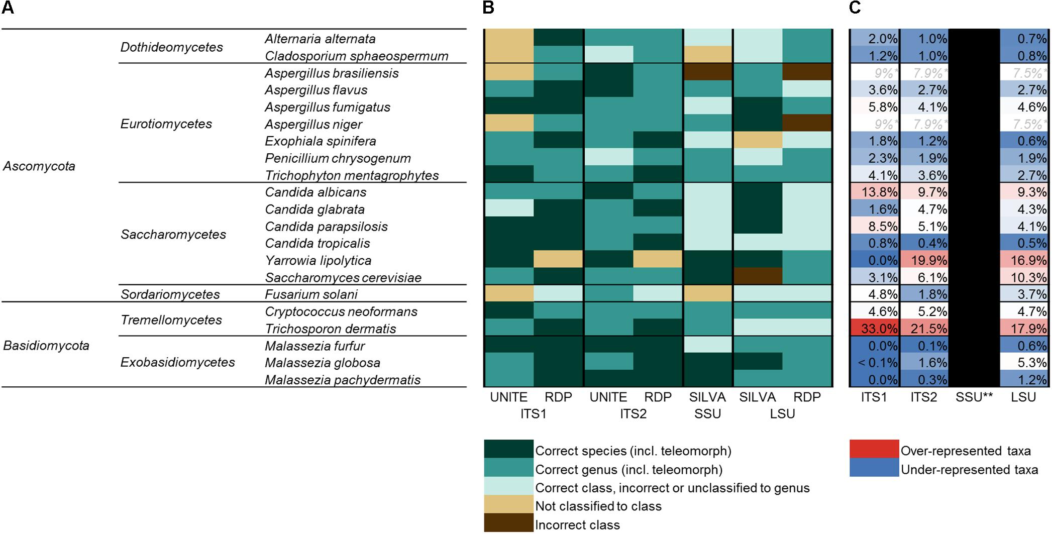 Frontiers | Characterizing the Human Mycobiota: A Comparison of ...
