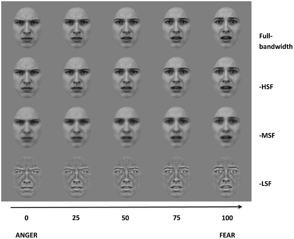 Frontiers | Processing of Fear and Anger Facial Expressions