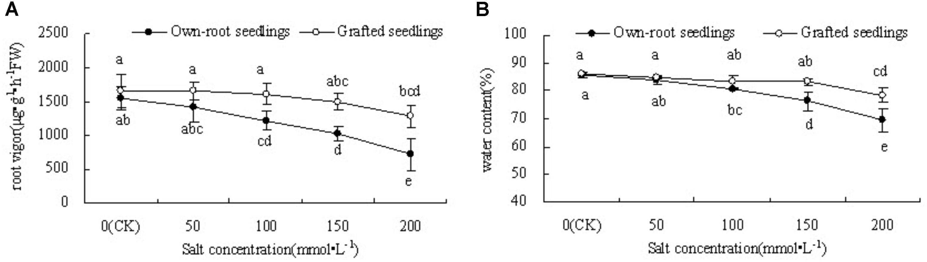 Frontiers Rootstock Alleviates Salt Stress In Grafted Mulberry Tomato Plants To Potatoes Plant Diagram Click Image See