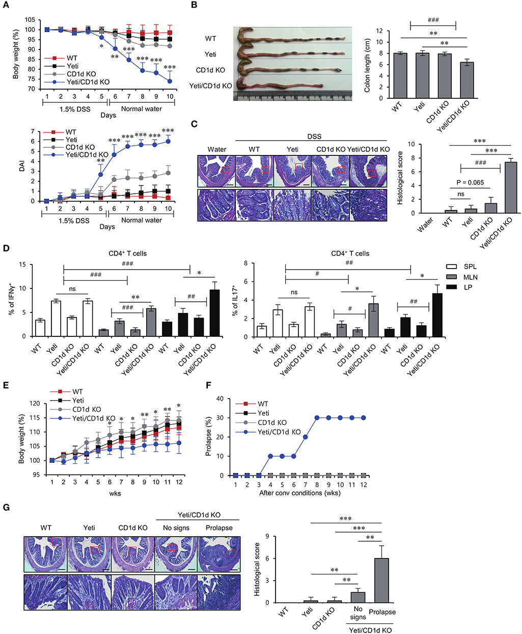 Frontiers | iNKT Cells Suppress Pathogenic NK1.1+CD8+ T Cells in DSS ...