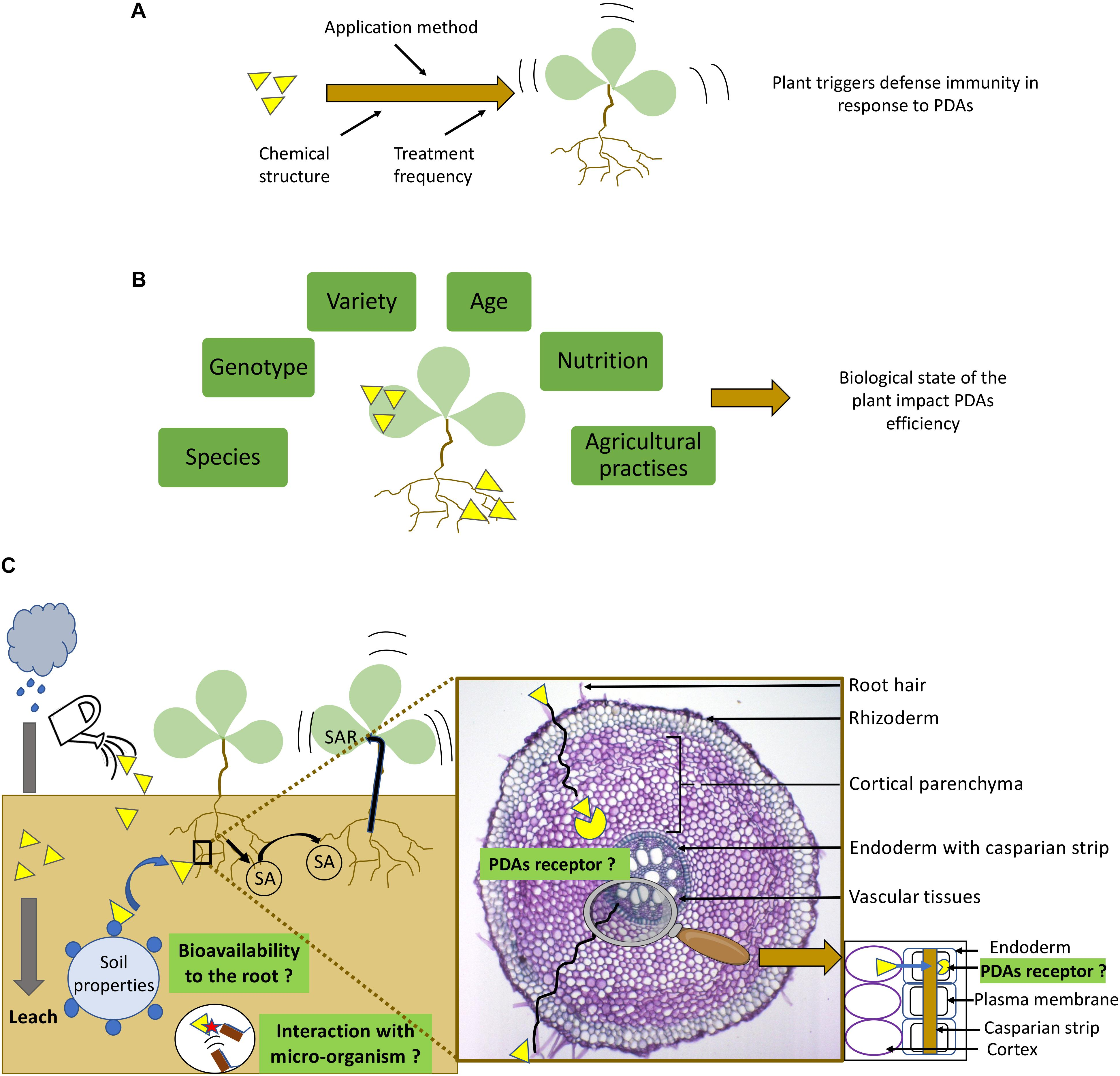 frontiers plant immunity is compartmentalized and specialized in