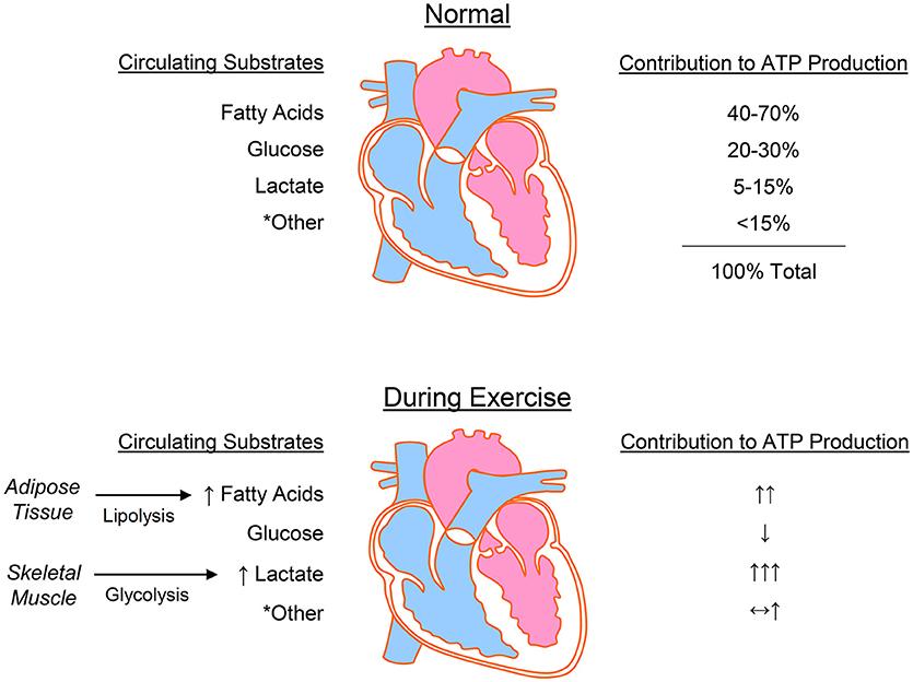 sugestii cu privire la produsi secundari de metabolism puternic