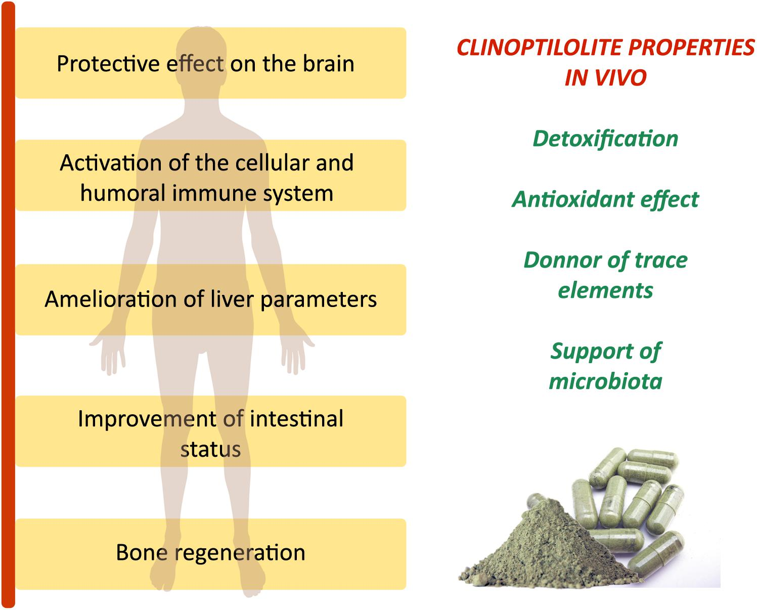 Frontiers | Critical Review on Zeolite Clinoptilolite Safety