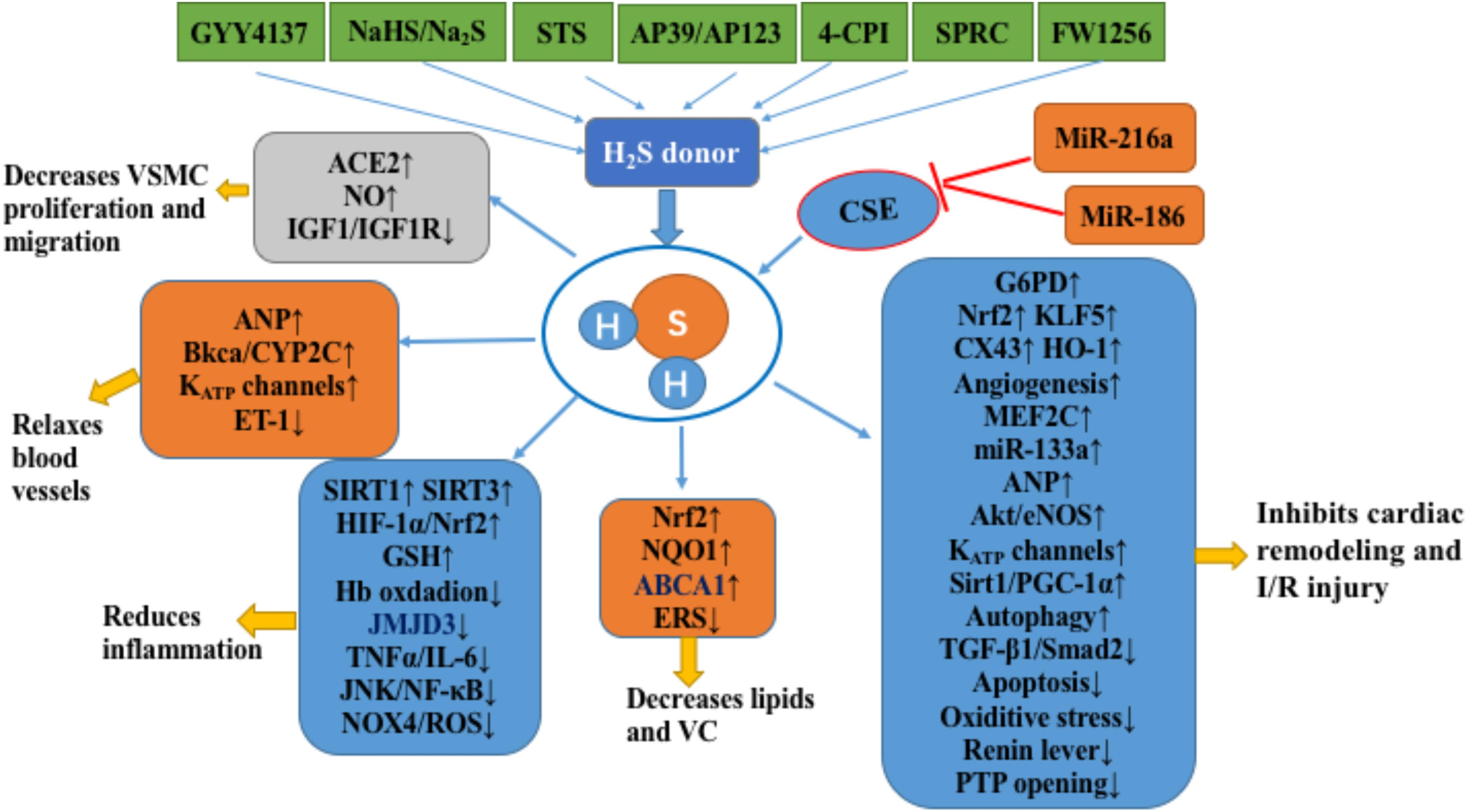 Frontiers Hydrogen Sulfide H2s Releasing Compounds Therapeutic