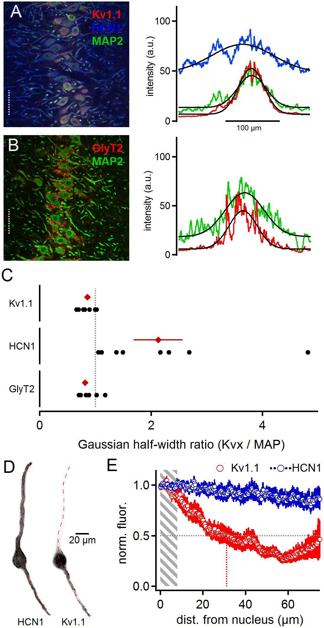 Frontiers   Distinct Distribution Patterns of Potassium