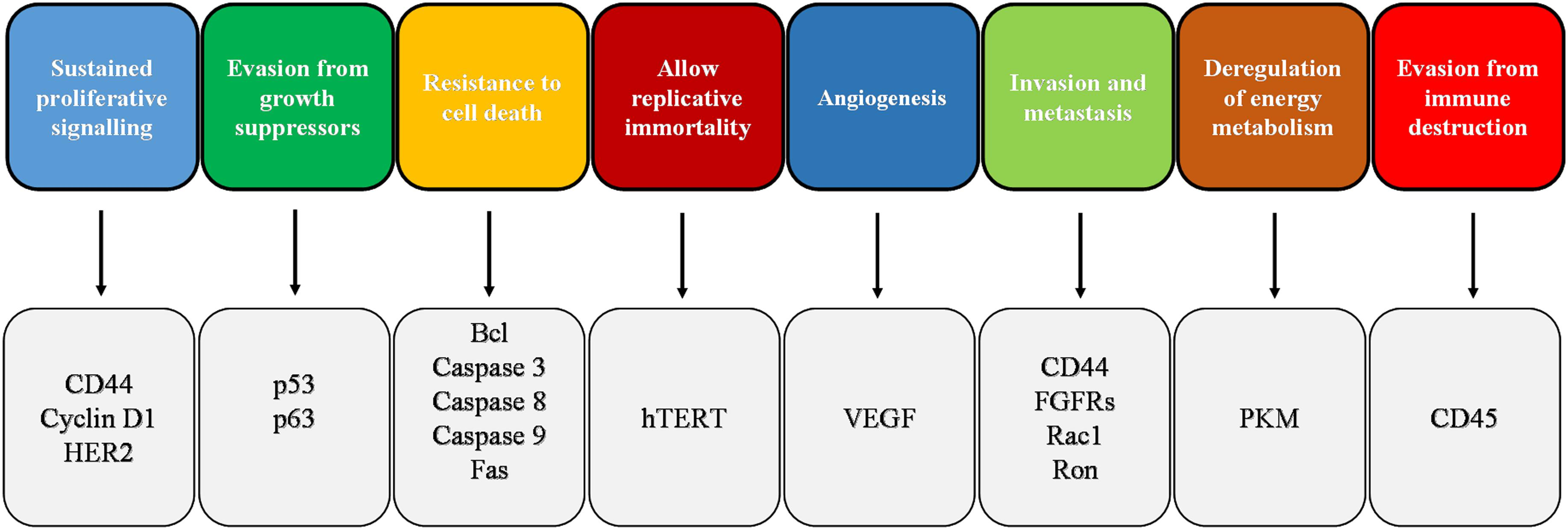 Frontiers Promising Antineoplastic Actions Of Melatonin Pharmacology