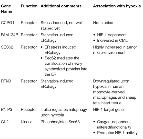Frontiers | Hypoxia and Selective Autophagy in Cancer