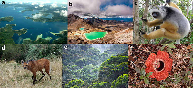 Figure 2 - Biodiversity hotspots and some of their endemic species.