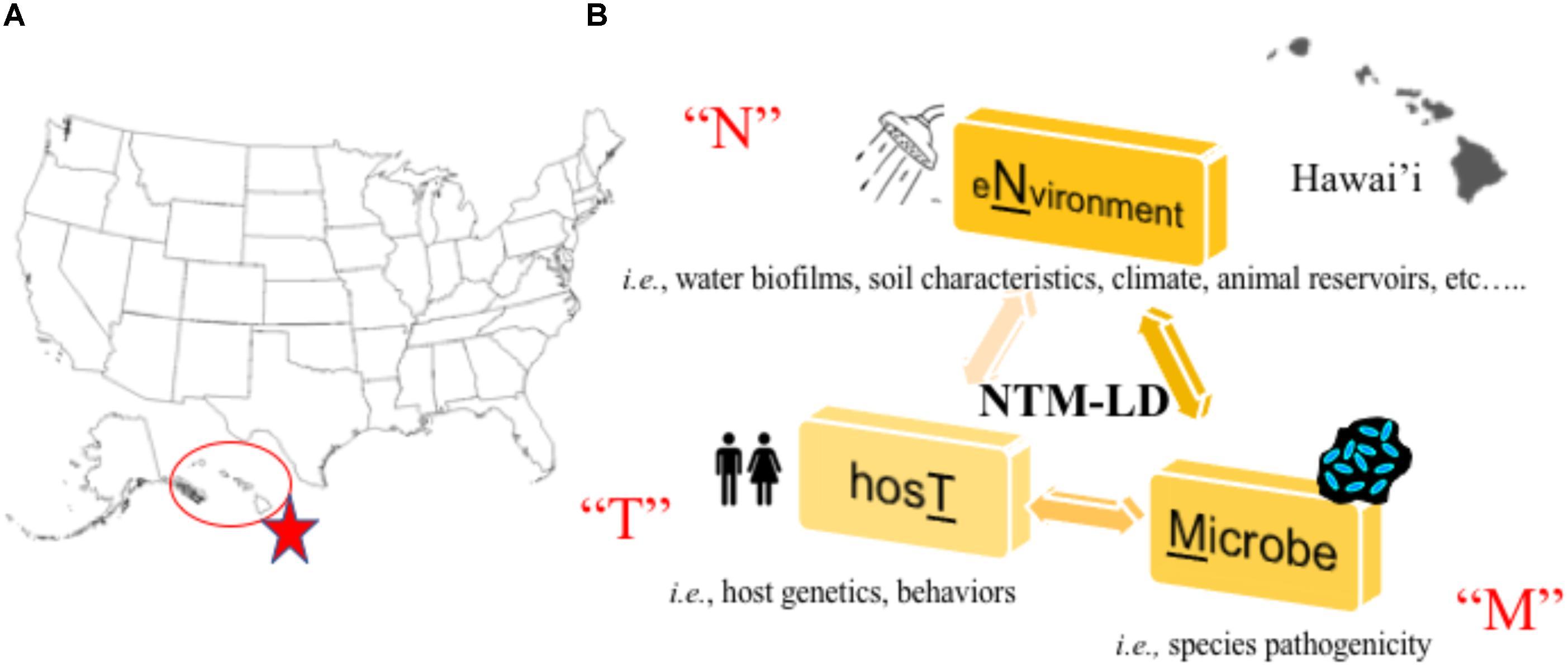 How atypical mycobacterial disease is spread