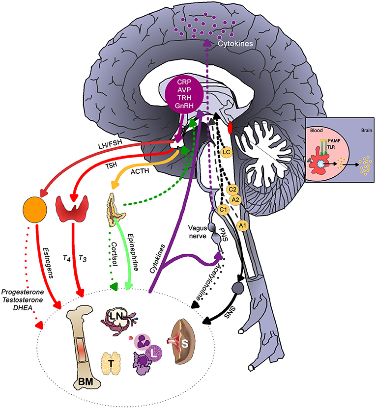 Frontiers   Inflammation–Nature's Way to Efficiently Respond
