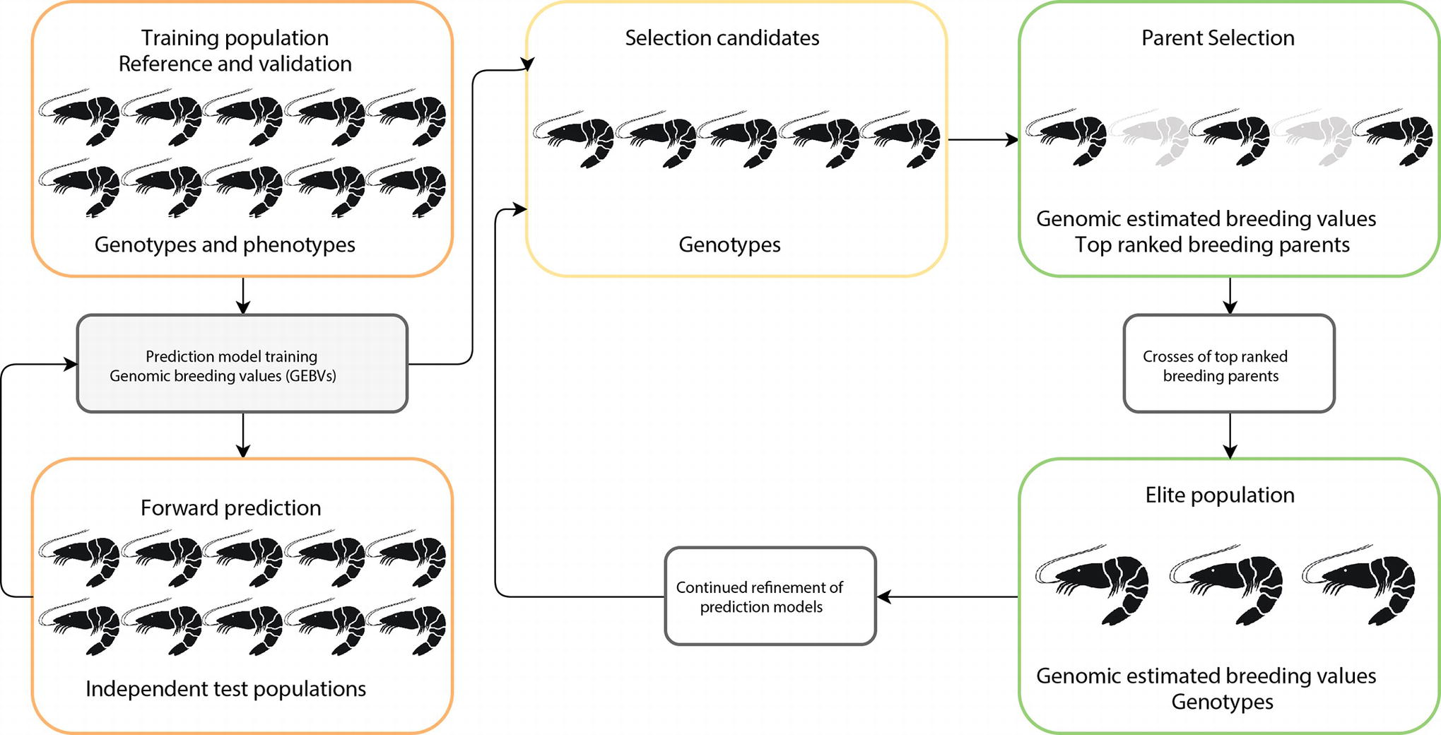 Frontiers   Genomic Selection in Aquaculture: Application