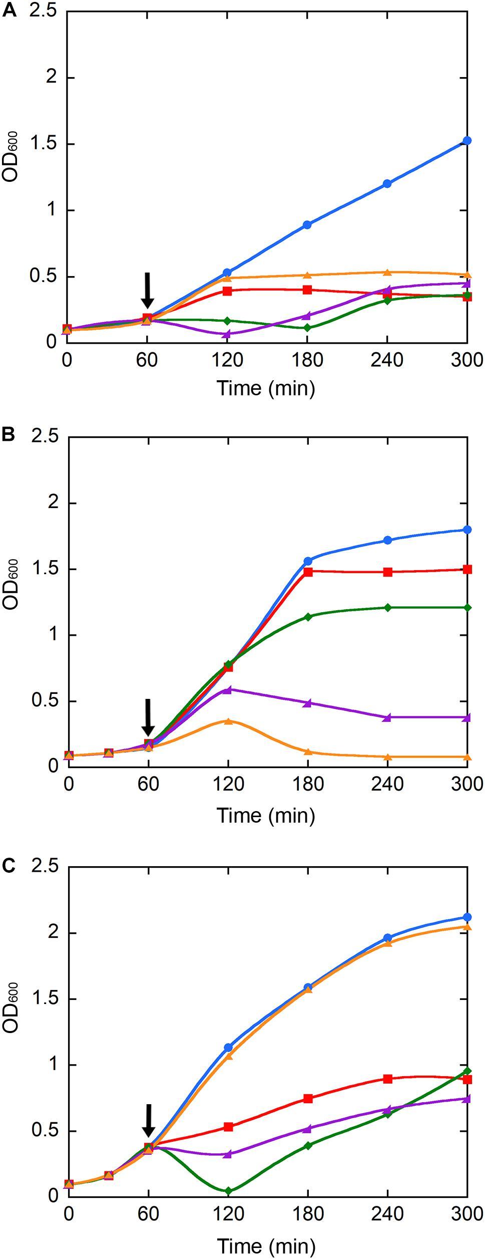 Frontiers | Magnetic Nanoconjugated Teicoplanin: A Novel