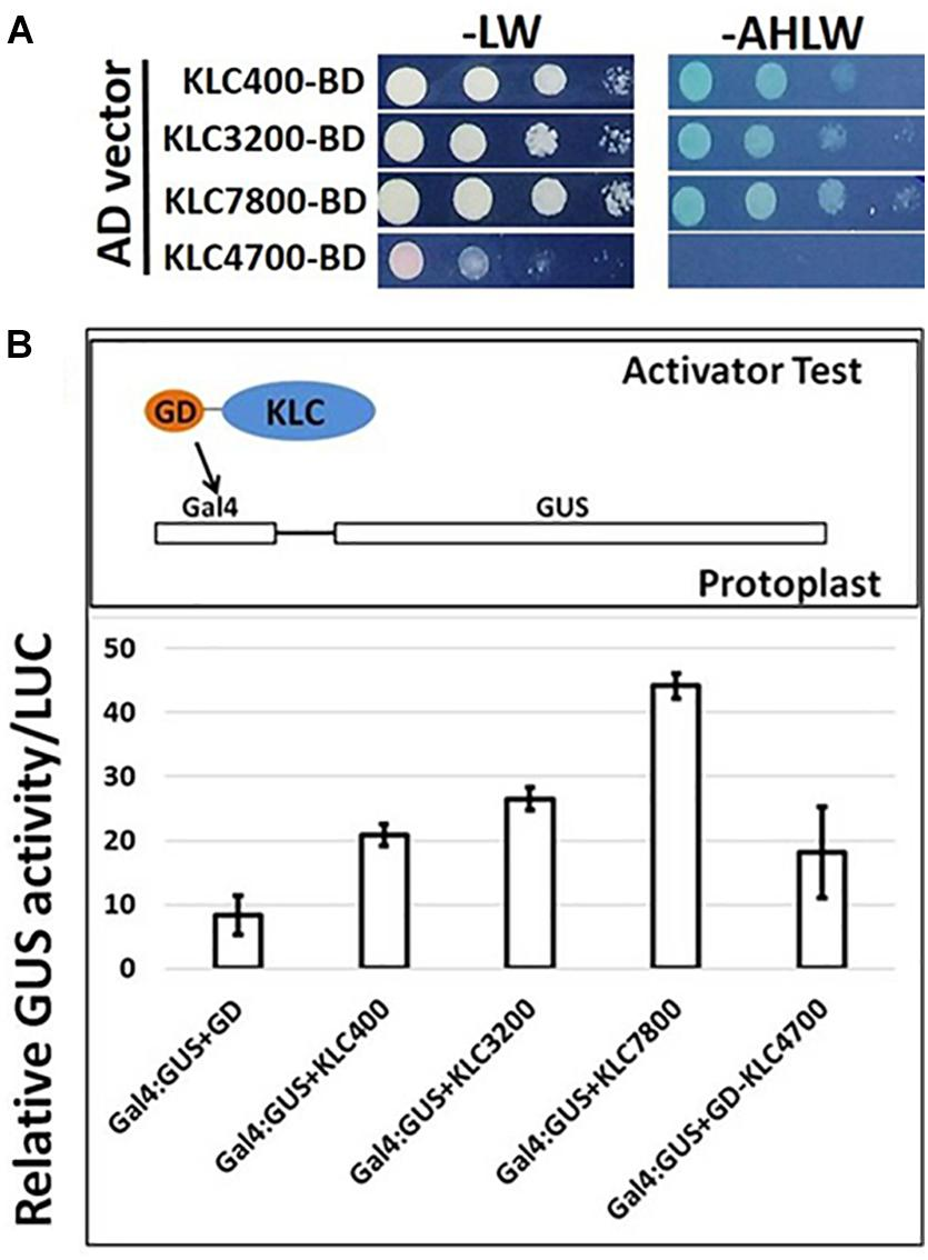 Frontiers | A New Calmodulin-Binding Protein Expresses in the