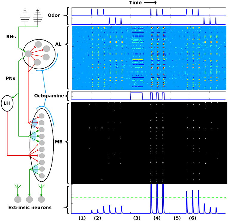 Frontiers | Biological Mechanisms for Learning: A Computational