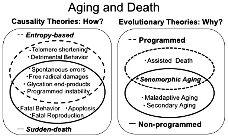 aging and death Aging and death in e coli date: february 16, 2005 source: public library of science summary: what about organisms that produce two.