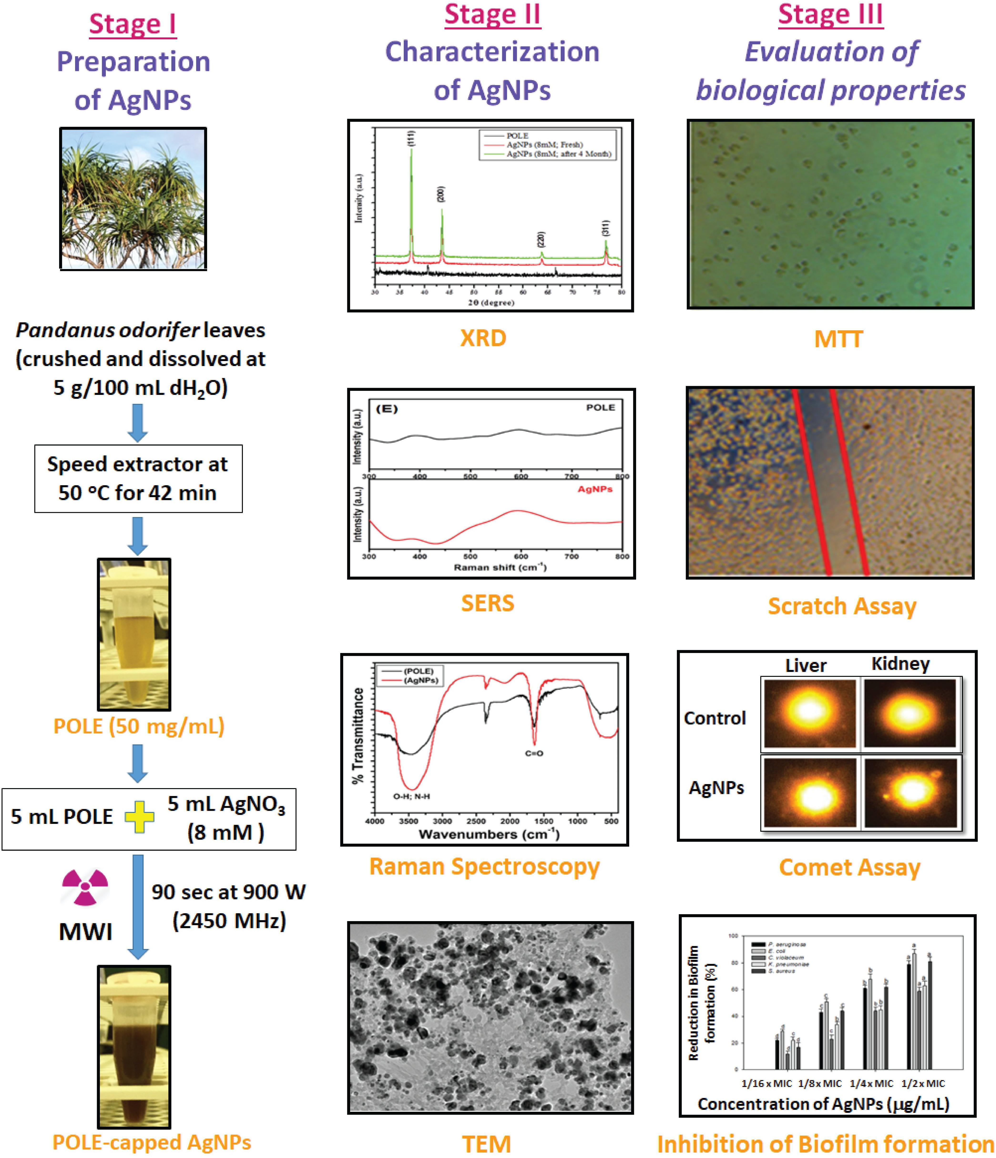 Frontiers | Biosynthesized Silver Nanoparticle (AgNP) From Pandanus